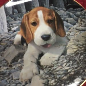Immortalized Baby Beagle